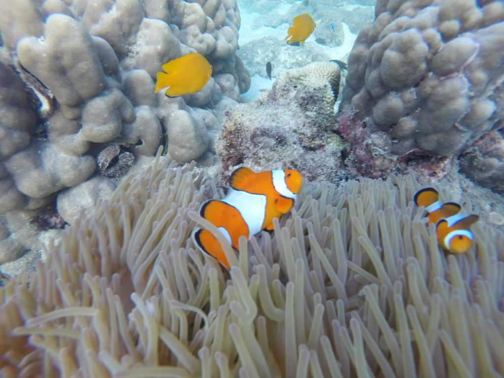 We found nemo