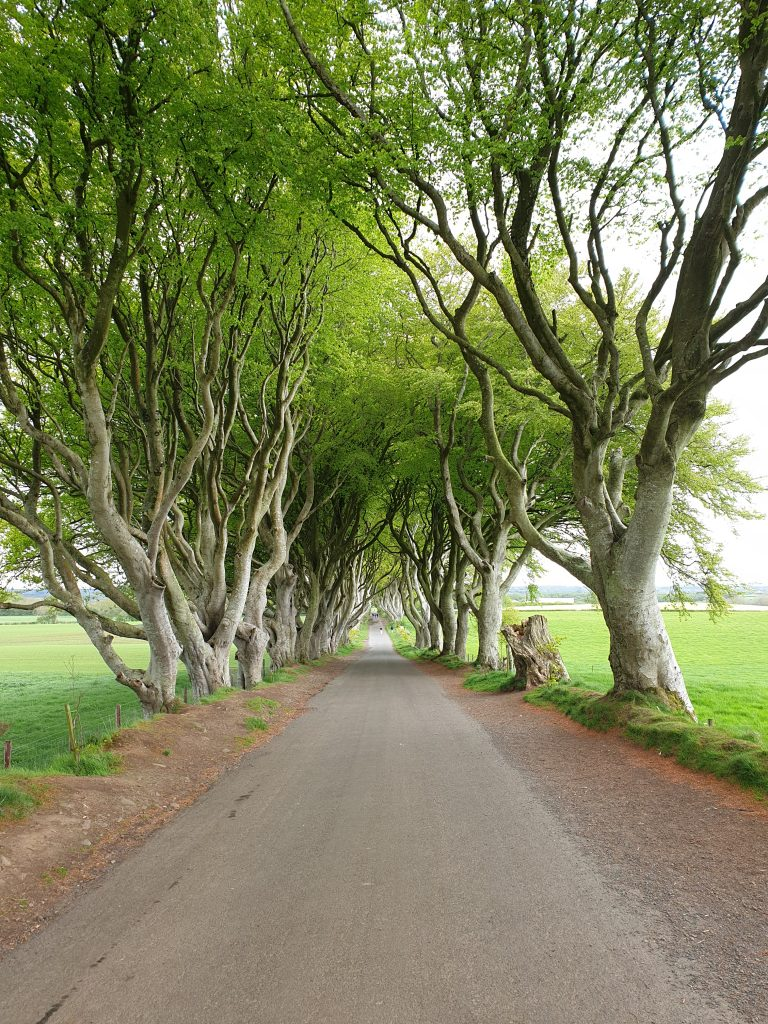 Nordirland The Dark Hedges