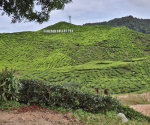 Malaysia - Cameron Highlands - Sehenswürdigkeiten - Bharat Teeplantage