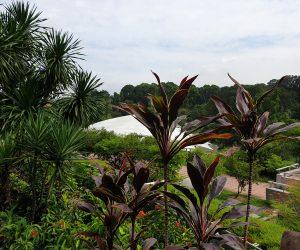 Malaysia - Kuala Lumpur - Sehenswürdigkeiten - Verdana Botanischer Garten