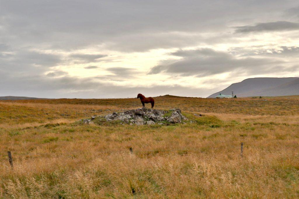 Island - Der Norden - Reykjafoss