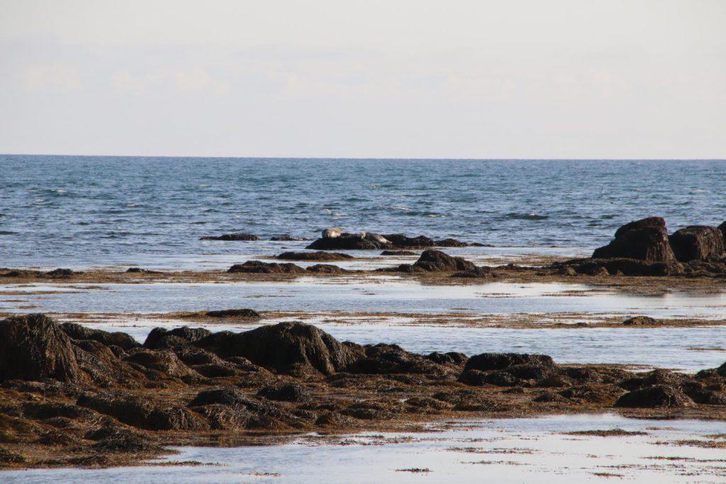 Island - Der Westen - Ytri Tunga