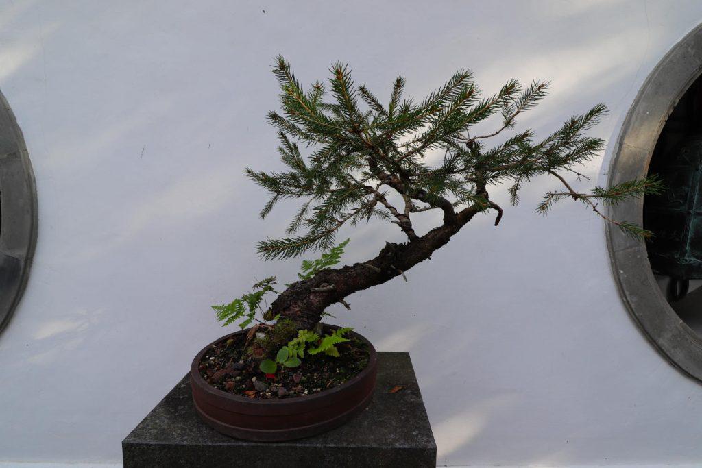 Deutschland - Wiesent - Nepal Himalaya Park - Chinagarten - Friedensglocke Bonsai
