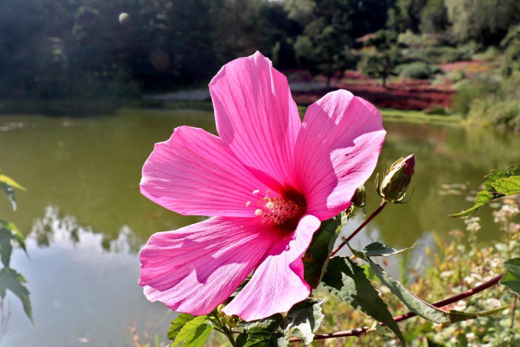 Deutschland - Wiesent - Nepal Himalaya Park - Heidegarten Großer See Blume