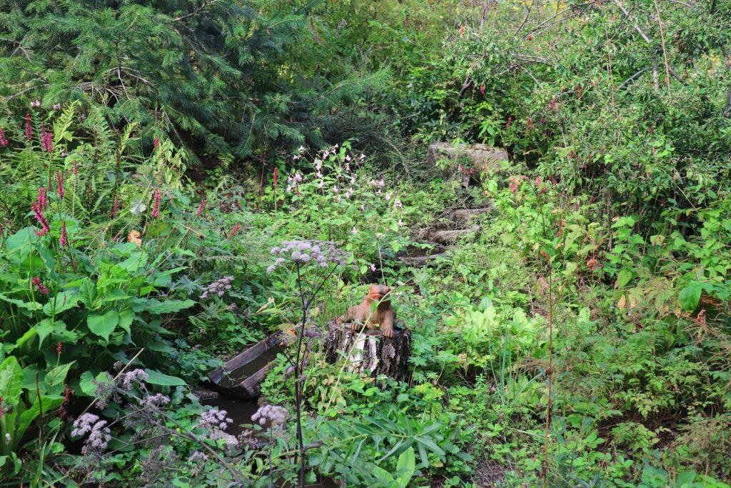 Deutschland - Wiesent - Nepal Himalaya Park - Koi Teich Rundweg 3